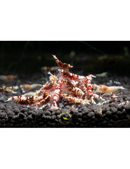 Shrimp Mineral Balls - 25mm